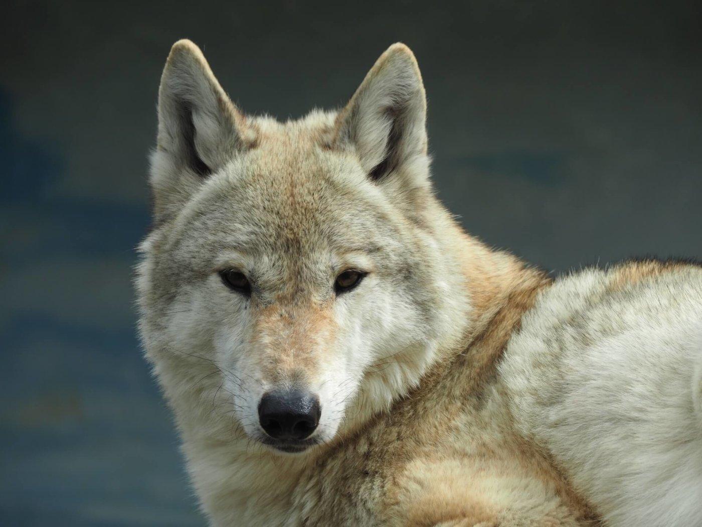 人狼ゲームのコツ。『市民』になったらどうする?