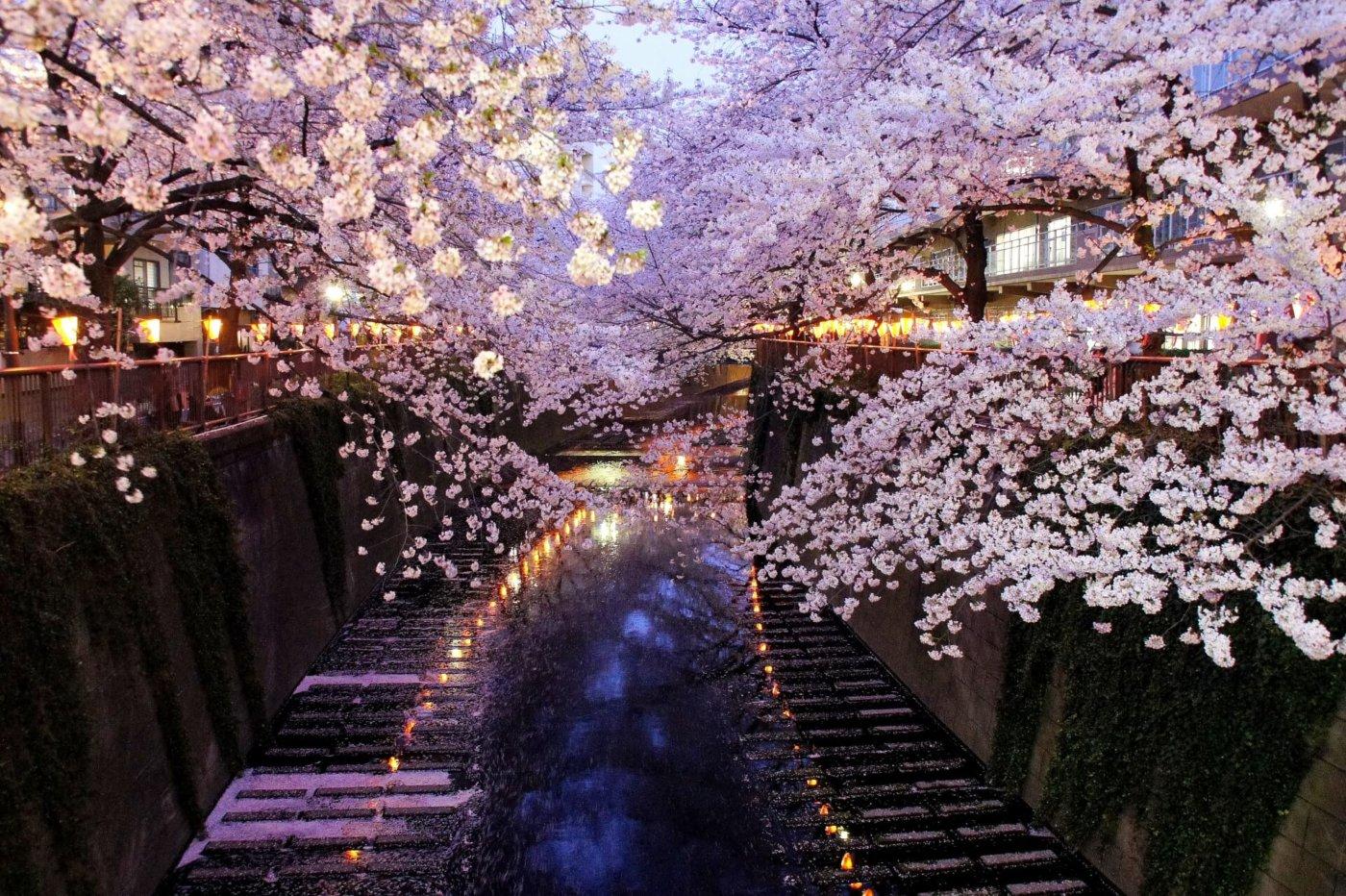 東京で屋台が出るお花見名所5選