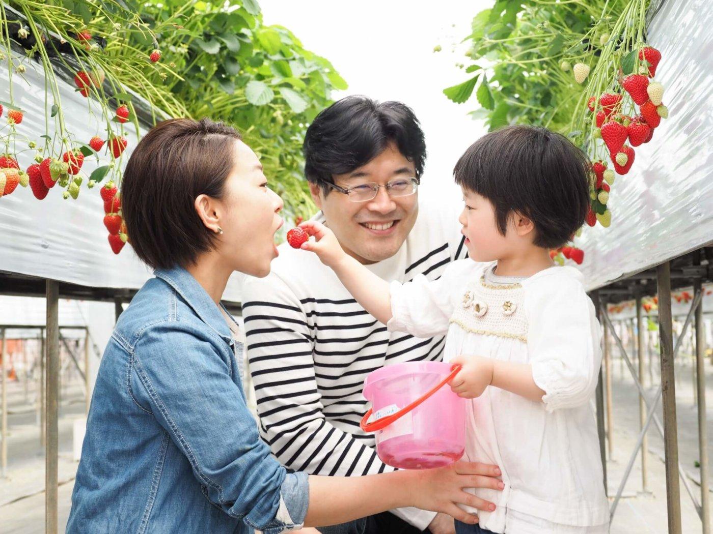 イチゴ狩りができる沖縄のおすすめスポット4選