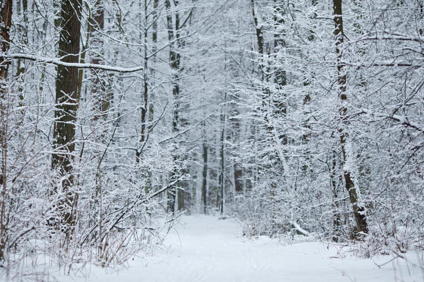冬になると歌いたくなる!カラオケで定番の冬ソングまとめ