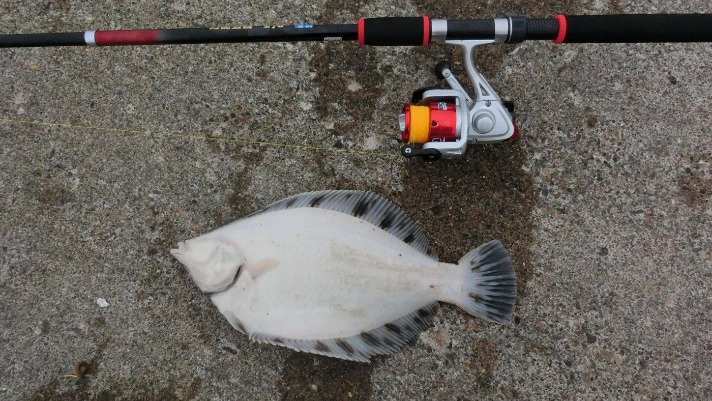 カレイ釣りが楽しめる!苫小牧のおすすめ釣りスポット5選