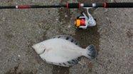 苫小牧のおすすめ釣りスポット5選