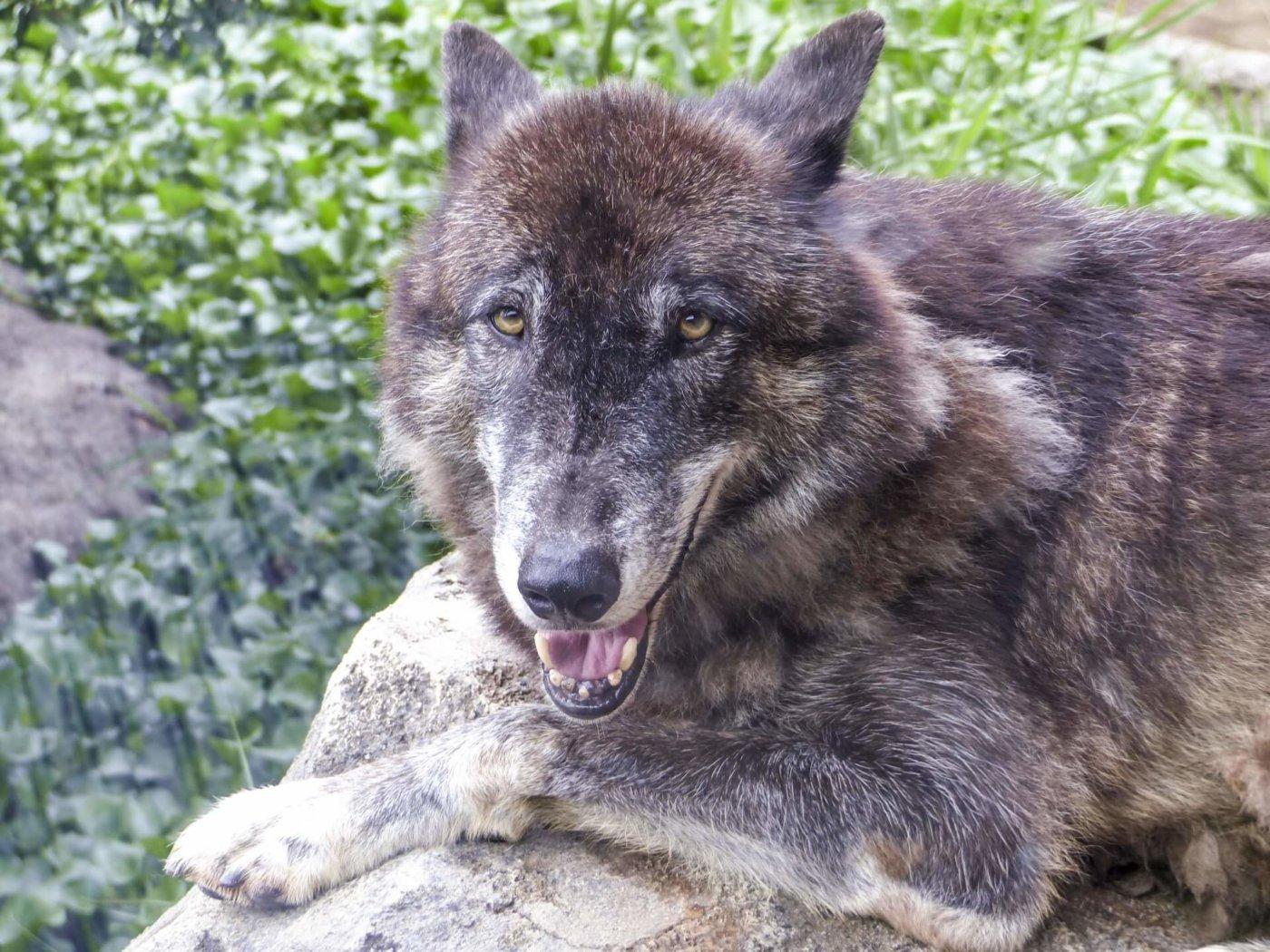 人狼ゲームのコツを紹介