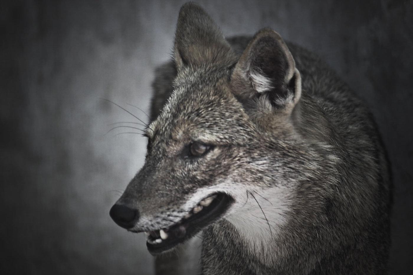 人狼用語を知ろう! FOとは?