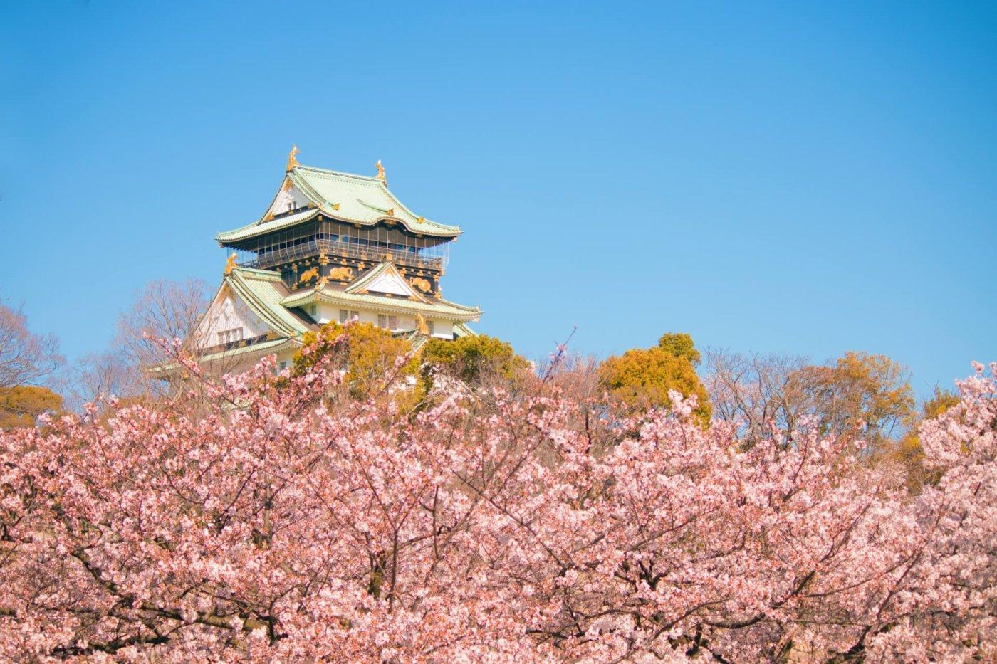 大阪でのお花見!おすすめの3ヶ所