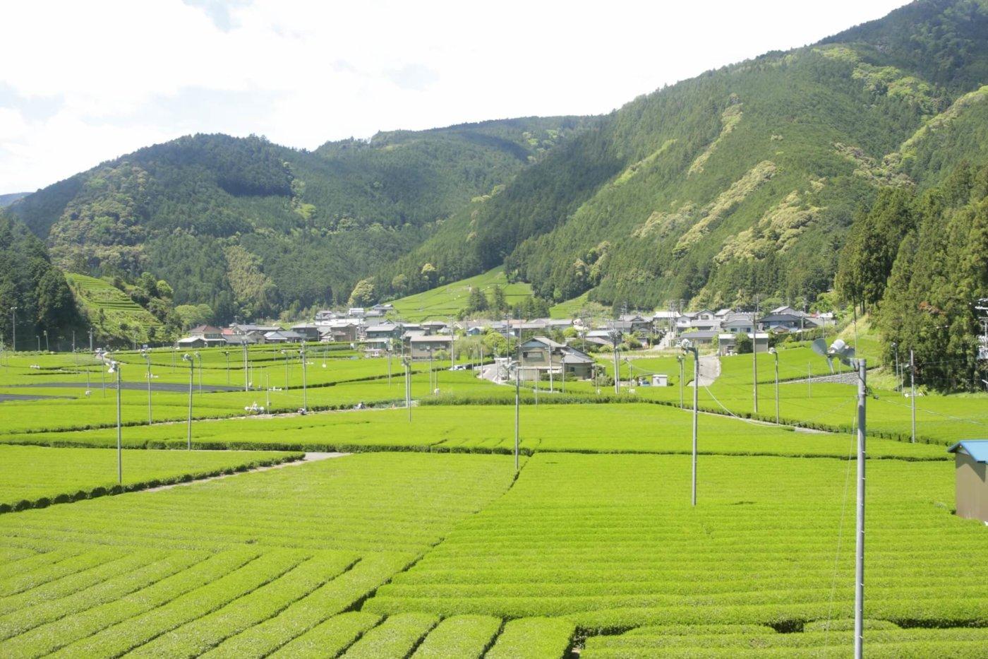 静岡の人気イベントをご紹介!