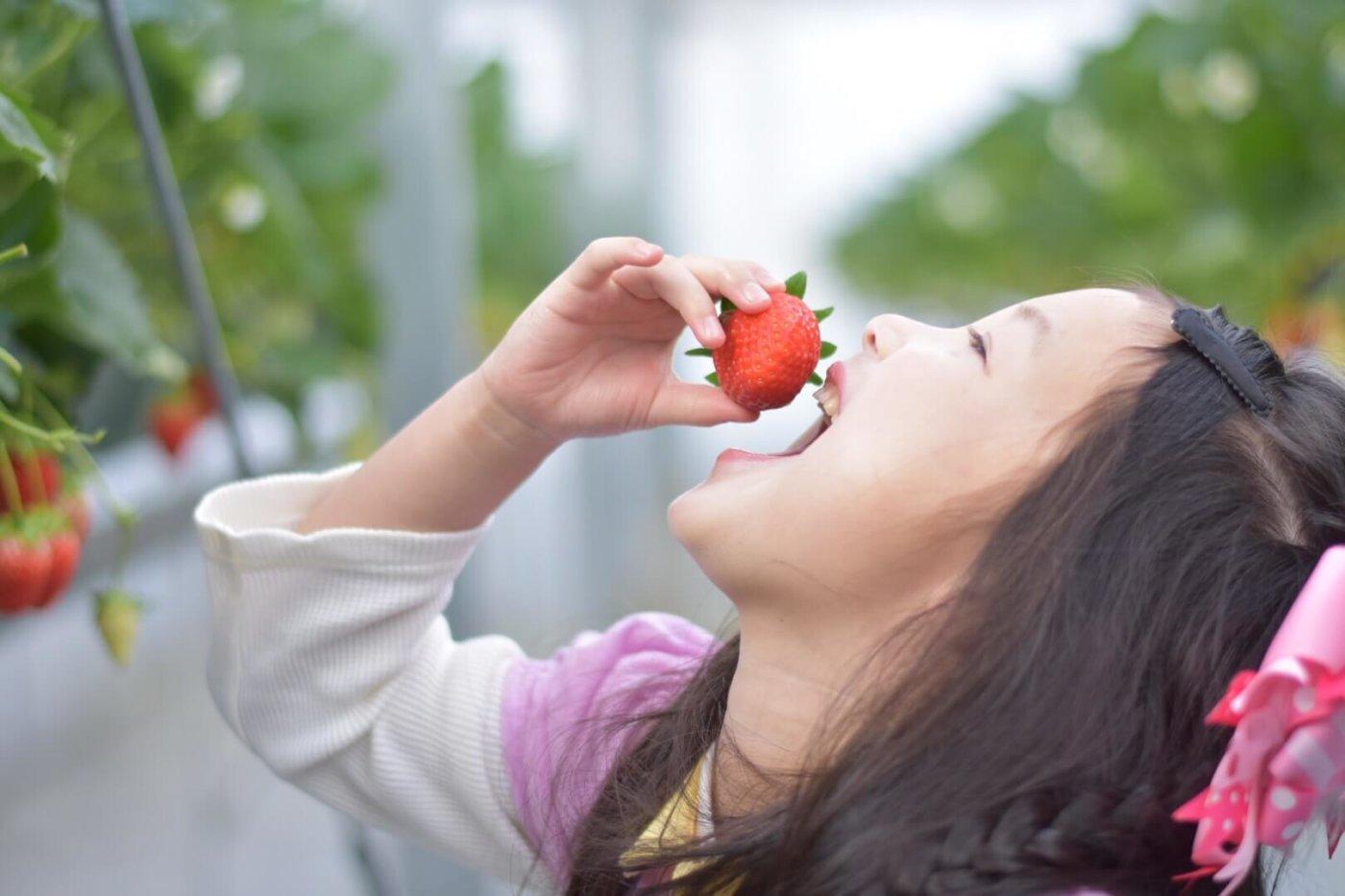 福岡のおすすめイチゴ狩りスッポト6選