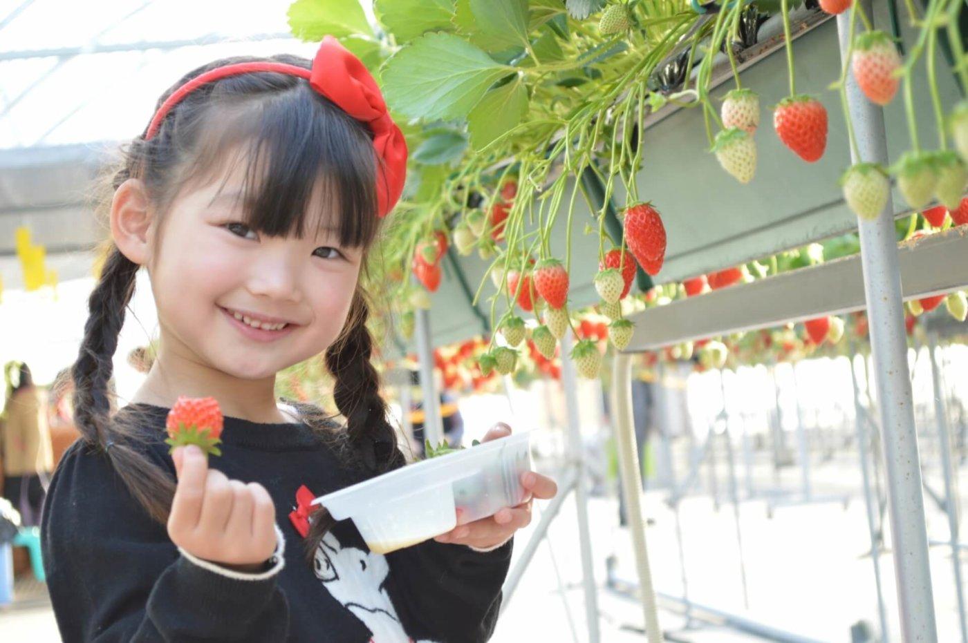 イチゴ狩りの時期と美味しい楽しみ方
